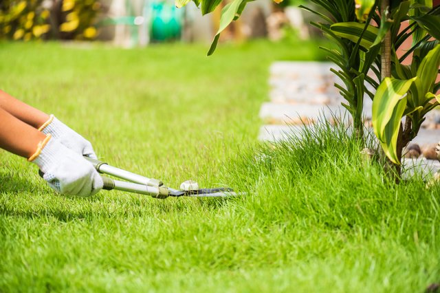 Everything you need to maintain your lawn throughout the year