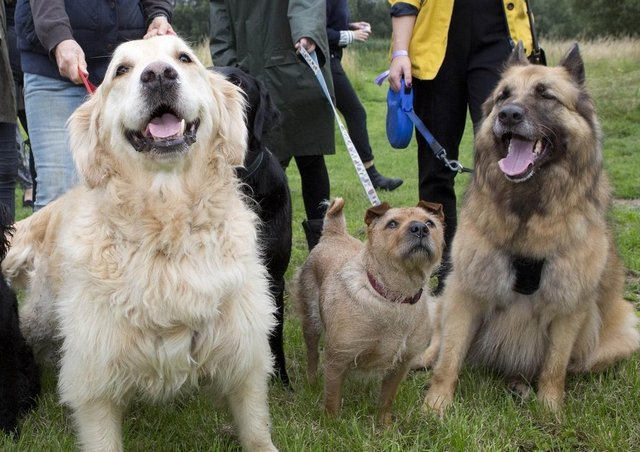 Dogs being exercised at Melton Country Park - a new Melton Dog Watch group is being set up after a spate of thefts across the country in the last year EMN-210420-105656001