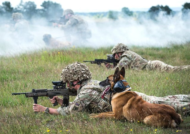 Military dogs and their handlers taking part in a live fire training exercise EMN-210514-163309001